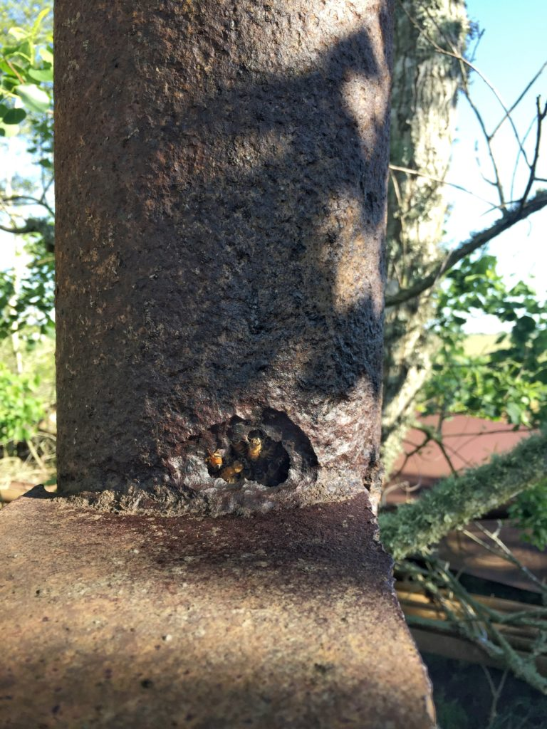 Bee hive in Pipe