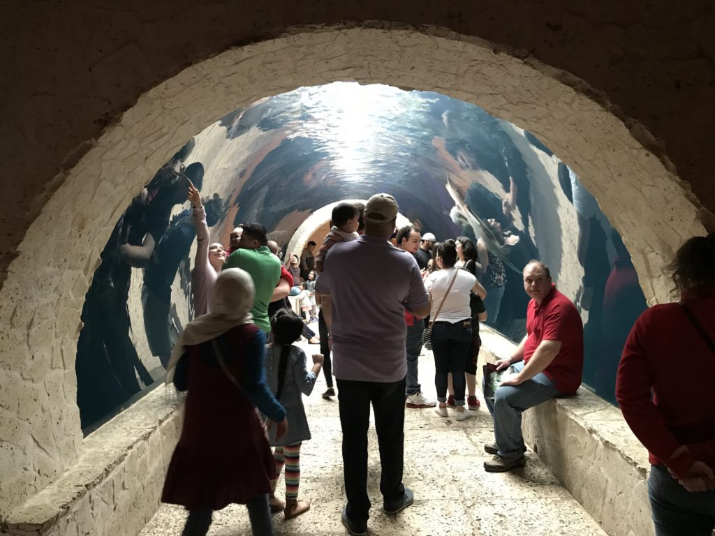 Shark tunnel at Dallas World Aquarium