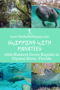 Swimming with manatees